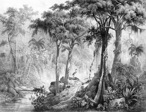 Rugenda Brazilian landscape