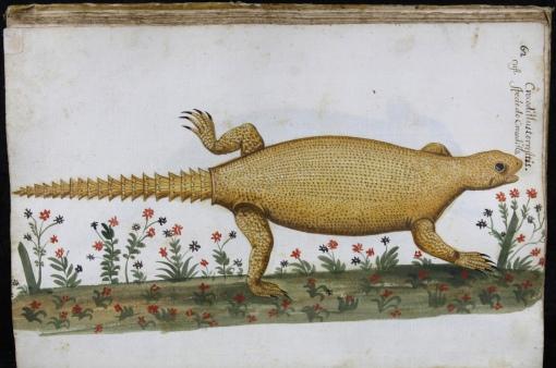 062Crocodrillus_terrestres