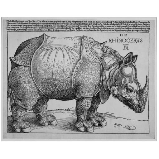 Albrecht Dürer's Rhinoceros